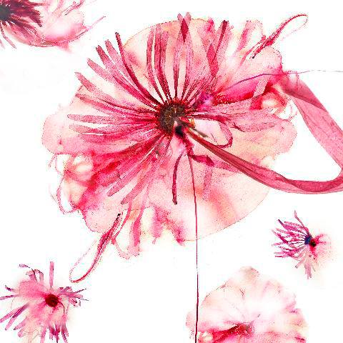 Collaborative Pink Pressed Flower #6